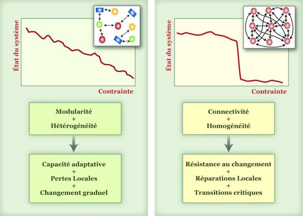 Réponses types des réseaux complexes aux perturbations, M. Scheffer et al., « Anticipating critical transitions »