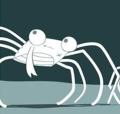 Crabe surpris